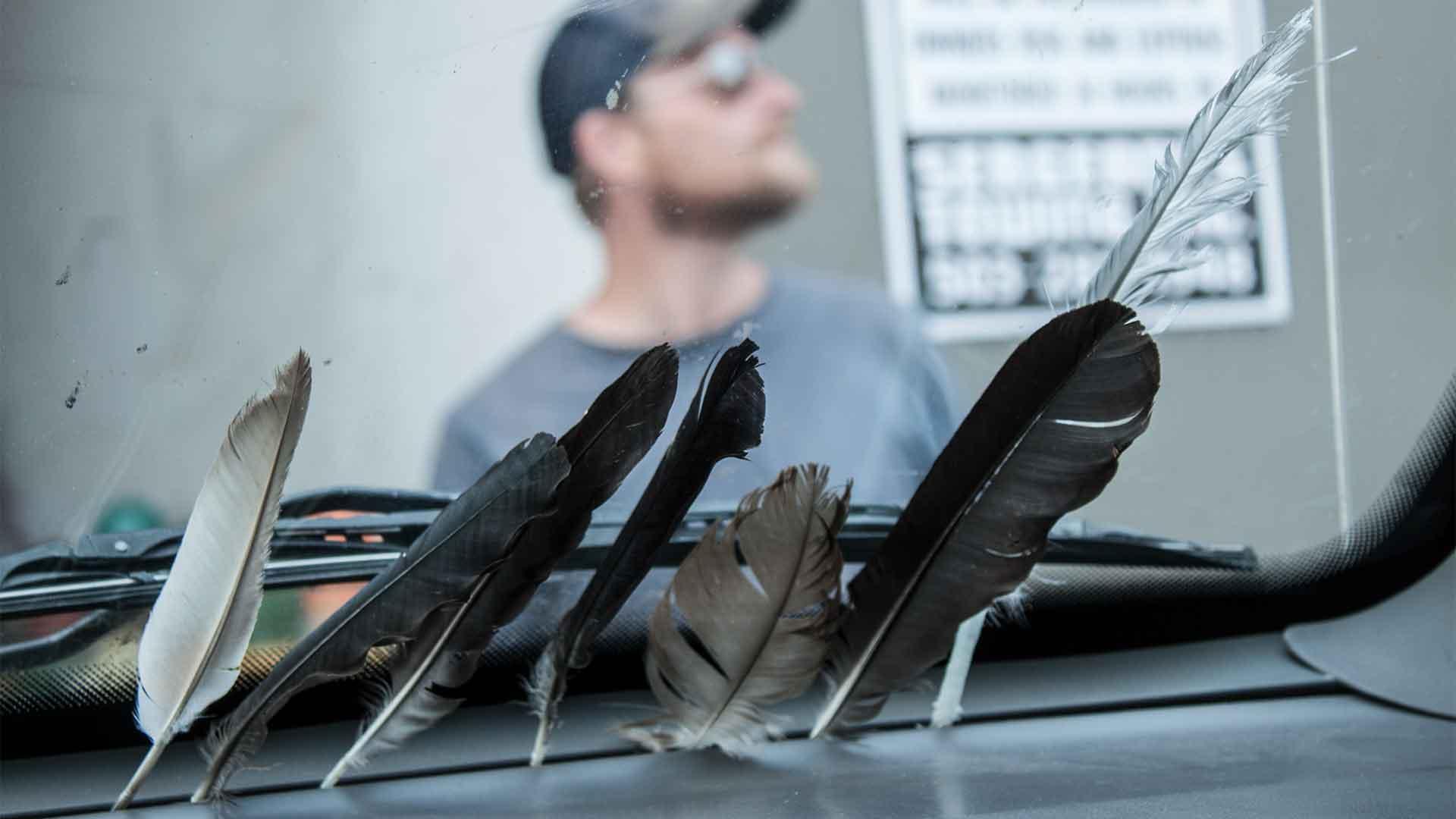 Immer wieder begegnen uns Federn auf unseren Wegen; damit wir weiterfliegen, nehmen wir sie mit
