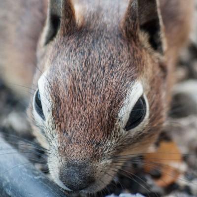 Darf ich vorstellen: das Hörnchen