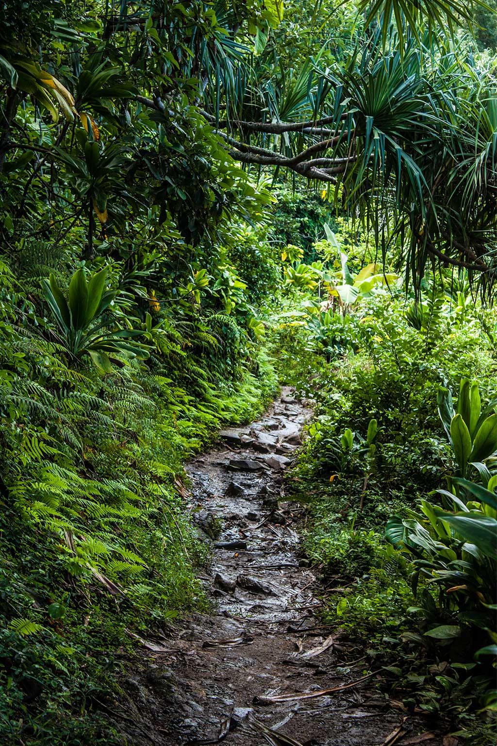 durch den dichten Regenwald