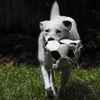 Und den Ball werfen