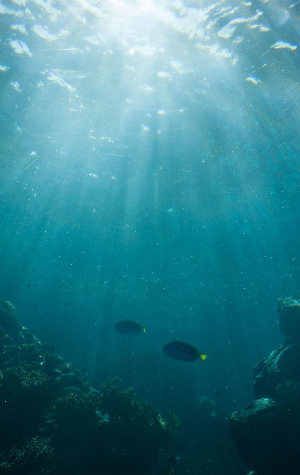 Nicht zu vergessen die Unterwasserwelt am Reef