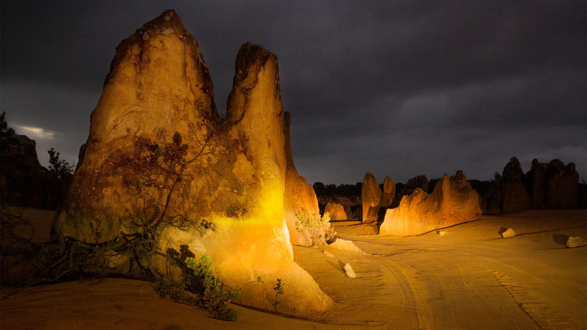 Außergewöhnliche Landschaft mit versteinerten Bäumen in einer Wüste