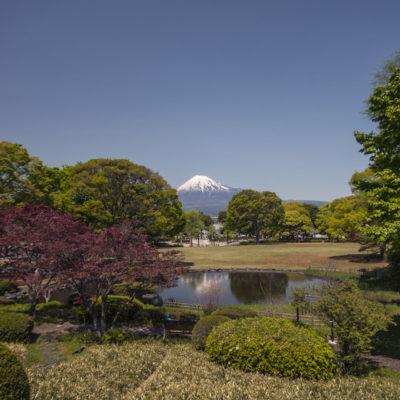 Blick auf den Fuji vom Park