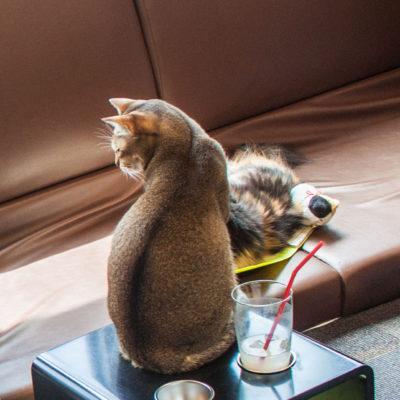 Eine beliebte Freizeitbeschäftigung der Japaner: Katzen streicheln.